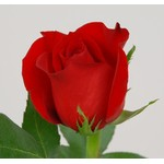 Larosa's Flowers
