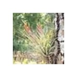 Pinetreehost.com